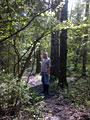 Красота весеннего леса
